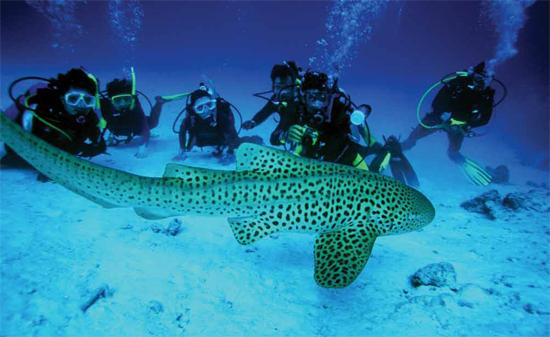 thailand-diving